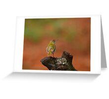 Common Tailor Bird, India. Greeting Card