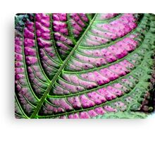 Iridescent Colorful Leaf Canvas Print
