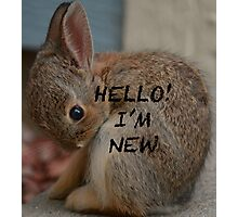 Hello! I'm New Photographic Print