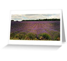 Tranquil Lavender Greeting Card