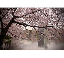 Sakura Blossoms Photographic Print