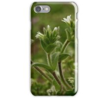 Mouse Ear ChickWeed iPhone Case/Skin