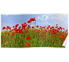 Field of Poppies | panoramic view Poster