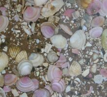 Sea Shells from The Solway Sticker
