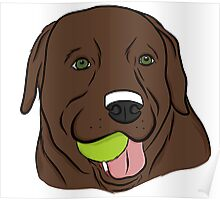 Chocolate Lab with Ball  Poster