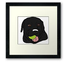 Black Lab with Ball  Framed Print