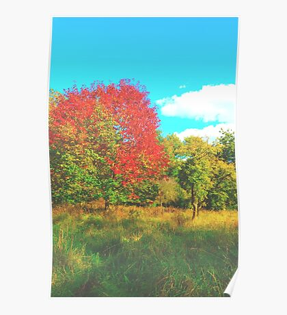 What a Colourful Tree Poster
