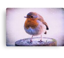 Photo art robin redbreast in the snow Canvas Print
