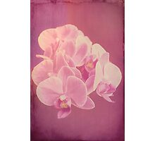 Photo art antiqued pink orchid Photographic Print