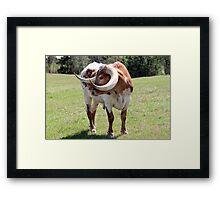 Texas Brown and White Longhorn Bull Framed Print