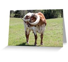 Texas Brown and White Longhorn Bull Greeting Card