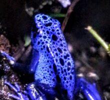 Blue Poison Dart Frog Sticker