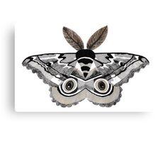 Eye of the Moth Canvas Print