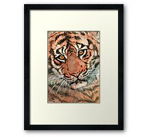 Tiger portrait 884 Framed Print