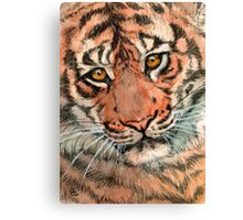 Tiger portrait 884 Canvas Print