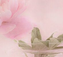 Pink Peony Blossom In Clear Glass Tea Pot  Sticker