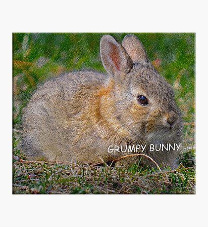 Grumpy Bunny -   Anytime Cute Photographic Print