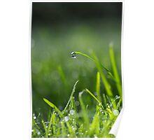 Sunshine droplets Poster