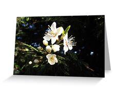 First tender blooming Greeting Card