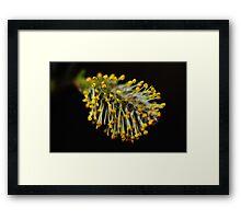 April Flowers Framed Print