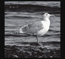 BW Side View Seagull Kids Tee