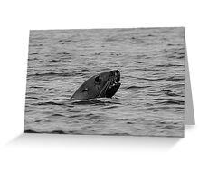 BW Sea Lion Greeting Card