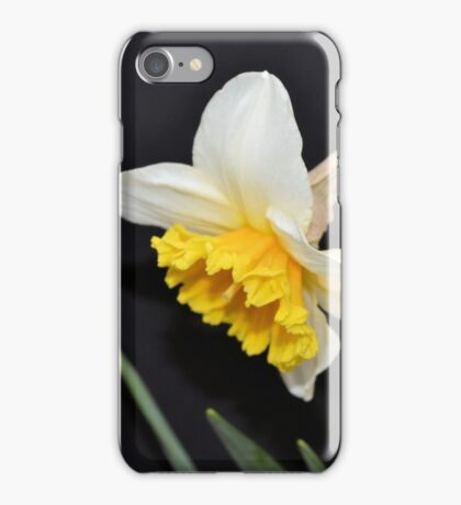 Lovely White and Yellow Daffodil iPhone Case/Skin