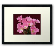 Tulips from Table Cape Framed Print