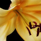 Yellow Lily by Vickie Emms
