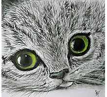 Tabby Photographic Print