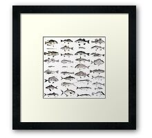 Fish Collection Framed Print