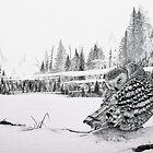 Foggy Morning by Mike Wytinck