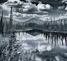 The Pond by Priska Wettstein