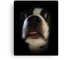 Bosco's Dumb Face Canvas Print