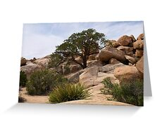 Tree Among the Boulders Greeting Card