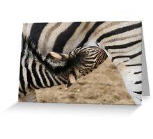 Chapman Zebra Baby Greeting Card
