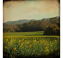 Once Upon a Time a Field of Flowers Photographic Print