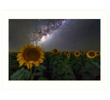 Stars on the Sunflower Art Print