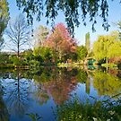 Claude Monet's water garden at Giverny by Alex Cassels