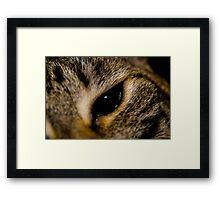 Cat Eye Framed Print
