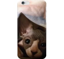 Sphynx cat baby iPhone Case/Skin