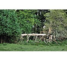 """""""Natural Fencing""""... prints and products Photographic Print"""