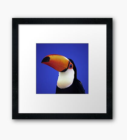 Toco Toucan Framed Print