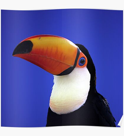 Toco Toucan Poster