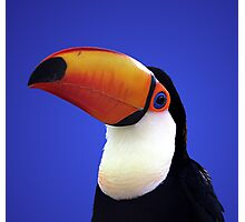 Toco Toucan Photographic Print