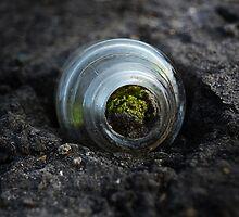 Moss inside glass bottle by merrywrath