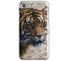 DC Tiger iPhone Case/Skin
