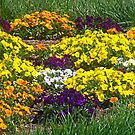 Pansy Garden by James Brotherton