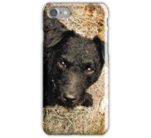 Fergus, Wire-Haired Patterdale Terrier iPhone Case/Skin