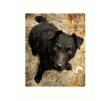 Fergus, Wire-Haired Patterdale Terrier Art Print